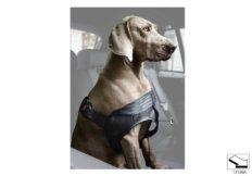 Безопасная шлейка для собак